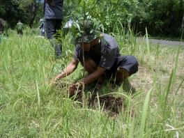 Penanaman Pohon